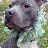 Adopt A Pet :: Marshmallow - Dallas, PA