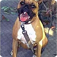 Adopt A Pet :: FRIEDA - dewey, AZ