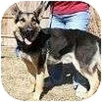 Adopt A Pet :: Bud - Alliance, NE