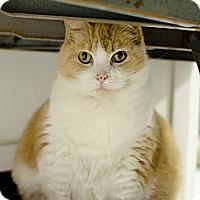 Adopt A Pet :: Nika - Muskegon, MI