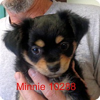 Adopt A Pet :: Minnie - baltimore, MD