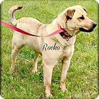 Adopt A Pet :: Rocko - Paris, IL