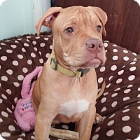 Adopt A Pet :: Milo - Villa Park, IL