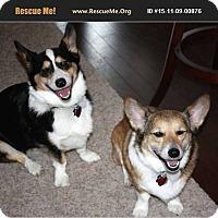 Adopt A Pet :: Yoshi and Ziggy - Lomita, CA
