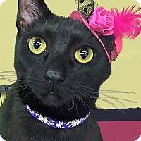 Adopt A Pet :: Onyx - Duluth, GA