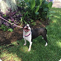 Adopt A Pet :: Flora - Portland, OR