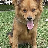 Adopt A Pet :: Pudge - Memphis, TN
