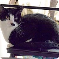 Adopt A Pet :: Bogart - Boise, ID