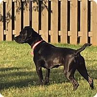 Adopt A Pet :: Lyric - Huntsville, AL