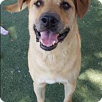 Adopt A Pet :: HARRY - Chandler, AZ