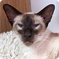 Adopt A Pet :: Xosshi - Davis, CA