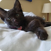 Adopt A Pet :: Buckie - Santa Ana, CA