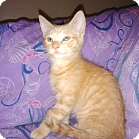 Adopt A Pet :: Orange Sherbet - Parkton, NC