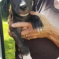 Adopt A Pet :: Willard - Sanford, FL