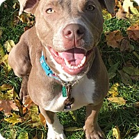 Adopt A Pet :: Matilda *Are you looking for a running partner?* - Clarkston, MI