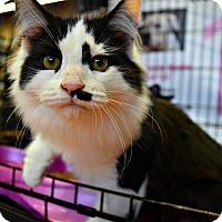 Adopt A Pet :: WOOZIE - Toronto/GTA, ON