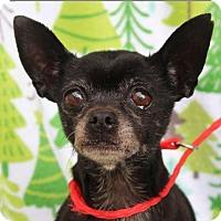 Adopt A Pet :: ANGEL - Red Bluff, CA