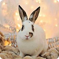 Adopt A Pet :: Junebug - London, ON