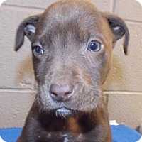 Adopt A Pet :: Larry - Oxford, MS