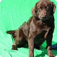 Adopt A Pet :: Pearl - Thomasville, NC