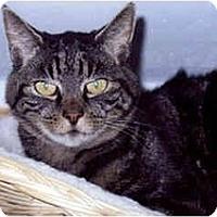 Adopt A Pet :: Lynzee - Medway, MA