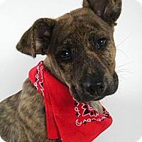 Adopt A Pet :: Jasper - Monteregie, QC