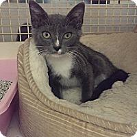 Adopt A Pet :: Miss Liberty - Stafford, VA