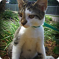 Adopt A Pet :: Astro - Gadsden, AL