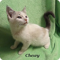Adopt A Pet :: Chewy - Bentonville, AR