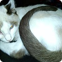 Adopt A Pet :: Mr. Bojangles - Centralia, WA
