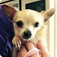 Adopt A Pet :: Goochi - Orlando, FL