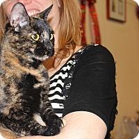 Adopt A Pet :: Autumn - North Haledon, NJ