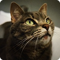Adopt A Pet :: Lilly - Monroe, GA