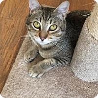 Adopt A Pet :: Little Ricky - Alamo, CA