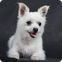 Adopt A Pet :: Princess - Nuevo, CA