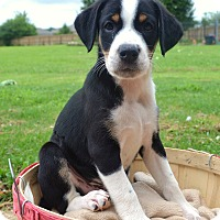 Adopt A Pet :: *Keebler - PENDING - Westport, CT