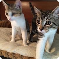 Adopt A Pet :: Wrangler and Ranger - Mission Viejo, CA