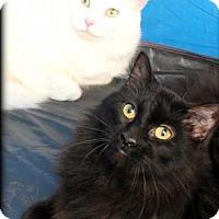 Adopt A Pet :: Caruso - Spring, TX