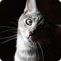 Adopt A Pet :: Precious - Kensington, CT