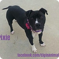 Adopt A Pet :: Pixie - Elgin, OK