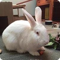Adopt A Pet :: Talia - Woburn, MA