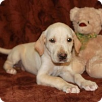 Adopt A Pet :: Eliza - Spring Valley, NY