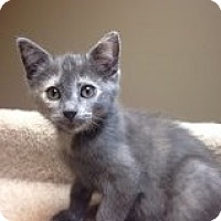 Adopt A Pet :: Jam-Adoption Pending! - Bridgeton, MO