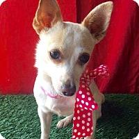Adopt A Pet :: MIMI - Corona, CA