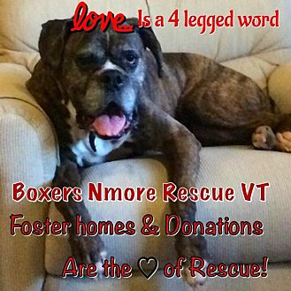 Boston Terrier/Boxer Mix Dog for adoption in Whiteville, North Carolina - FOSTER VOLUNTEERS NEEDED