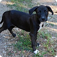 Adopt A Pet :: Morty - Towson, MD