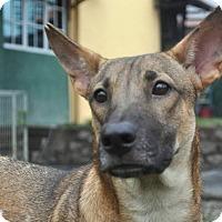 Adopt A Pet :: ZOEY - Wonder Lake, IL