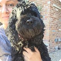 Adopt A Pet :: Annie - Rocky Hill, CT