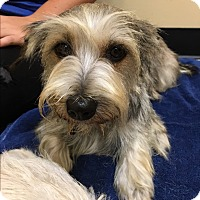 Adopt A Pet :: Mocha - Thousand Oaks, CA