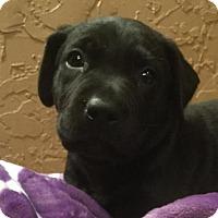 Adopt A Pet :: Charisma - Kaufman, TX